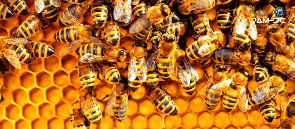 Популяция пчел в мире сокращается