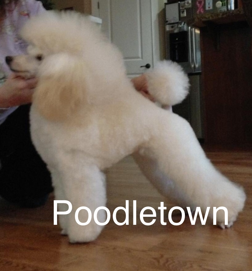 Poodletown Heir to the Throne