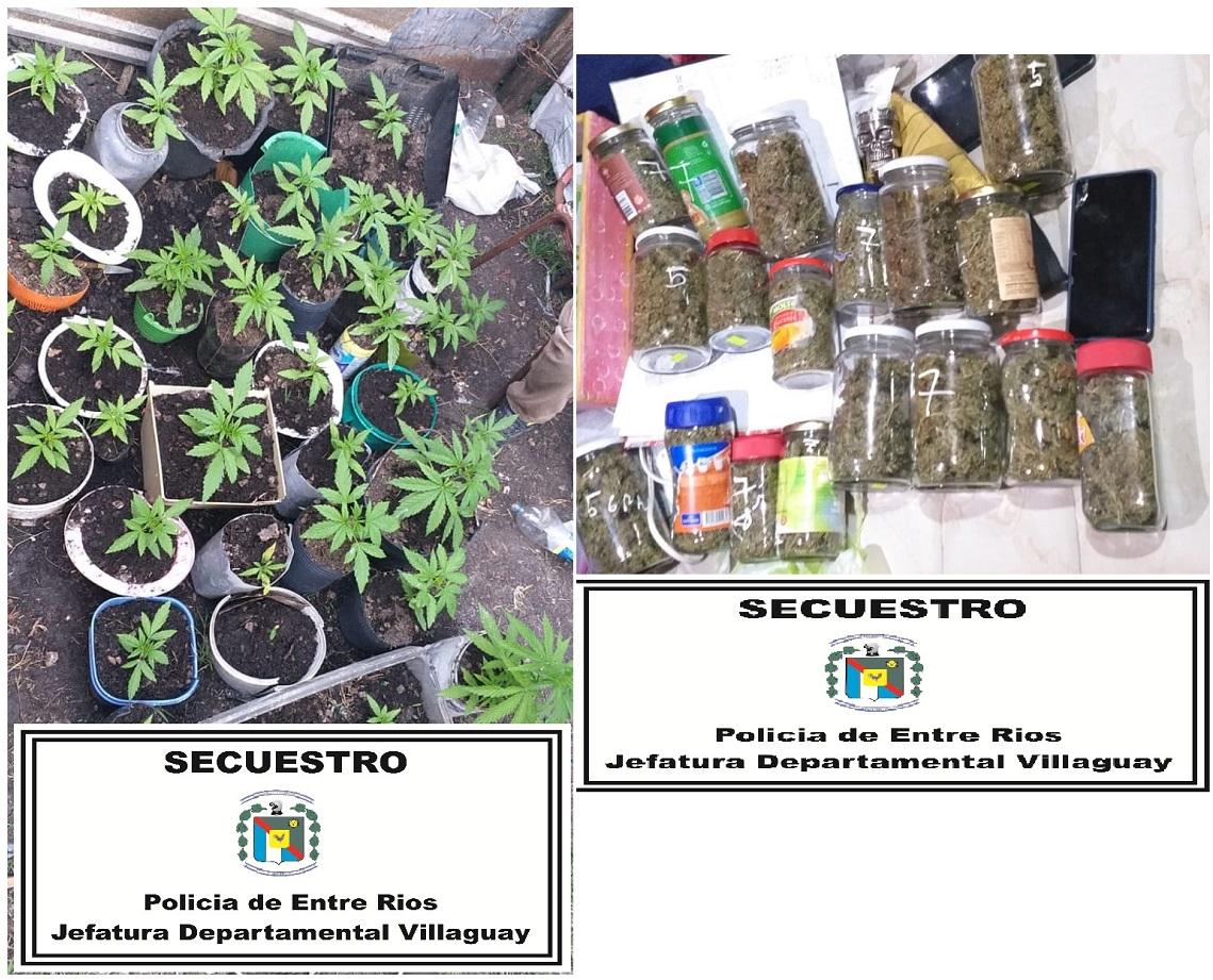 POLICÍA DE VILLAGUAY: División Investigaciones en Villa Domínguez, secuestró más de cuarenta plantas de cannabis sativa y frascos
