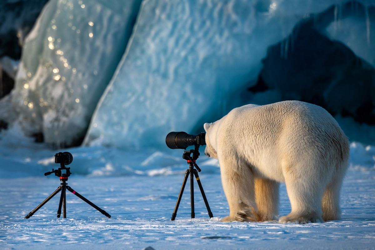 Уморительные финалисты конкурса Comedy Wildlife Photography Awards 2018 14