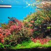 10-10-20-Aquarium