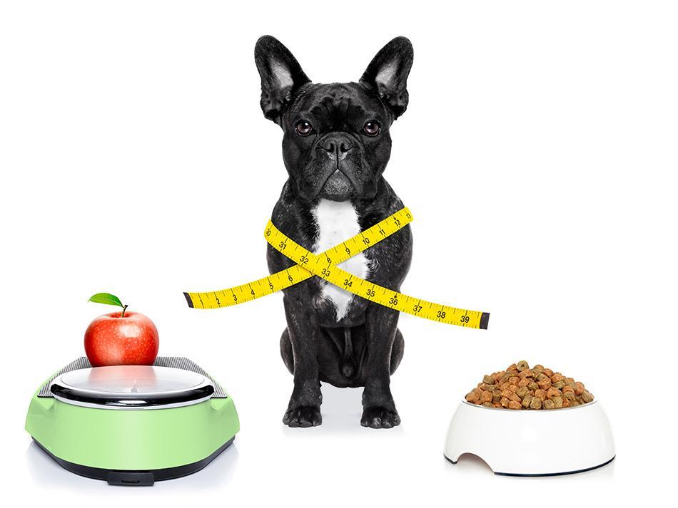 Tips to Improve Your Pet's Diet