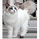 https://i.ibb.co/Mc12bFt/cat-white.png