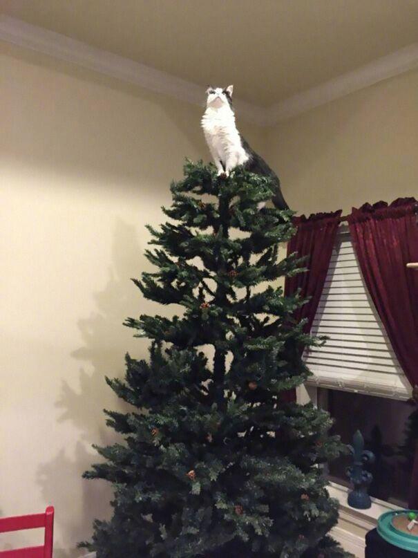 聖誕樹長貓系列,不會長出貓咪的聖誕樹不是一棵好聖誕樹 1