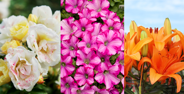All-fragrant, these 8 plants are suitable for natural perfume at home