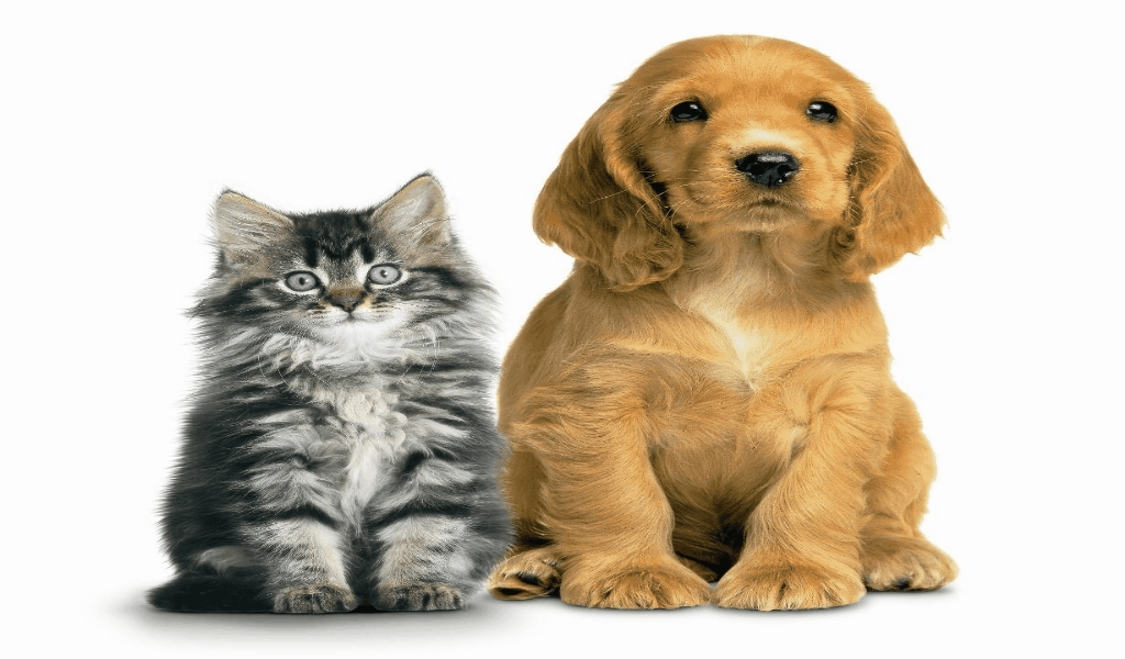 Celluloid & Vinyl Pet Adoption Website