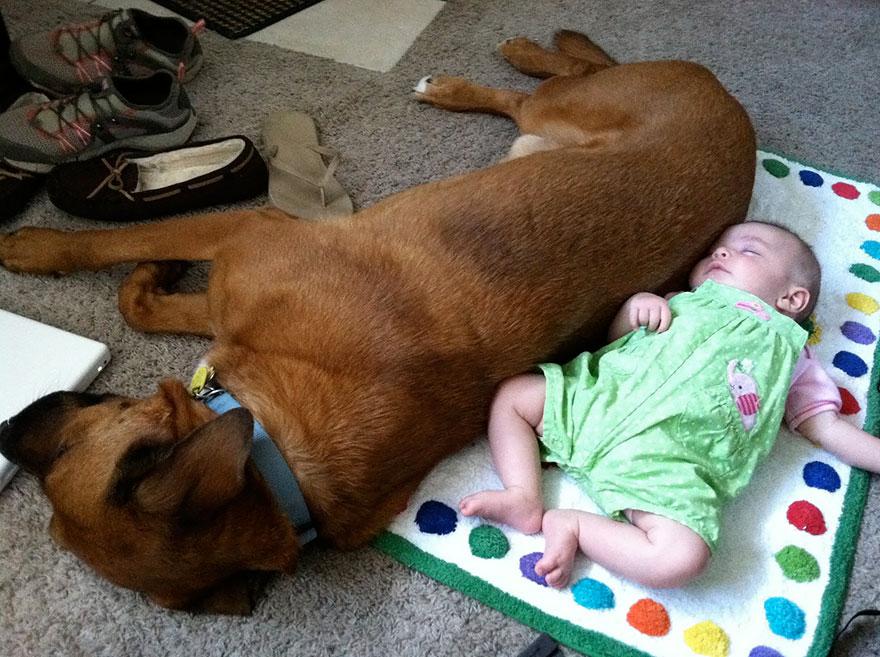 Когда собаки большие, а дети маленькие - 44 потрясающие фотографии - 44