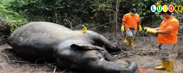 Neneng Mati di Kebun Binatang, Wali Kota Medan Sedih