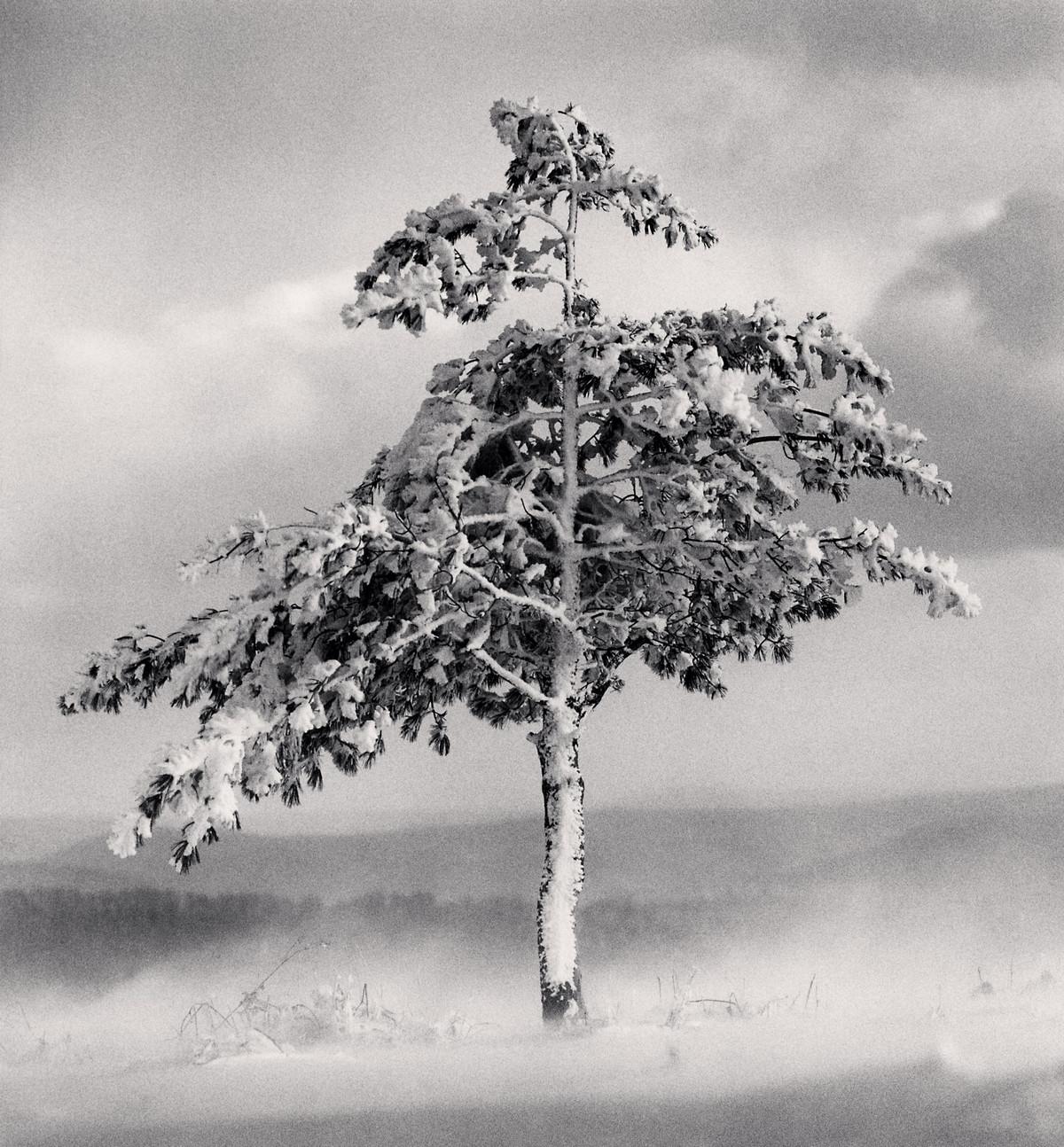 Портреты деревьев Майкла Кенны 4
