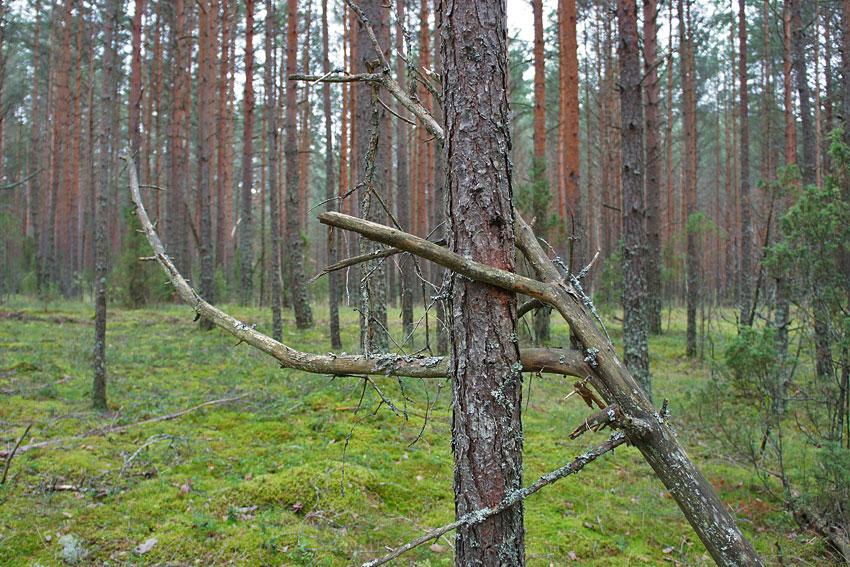 130819-woods-11