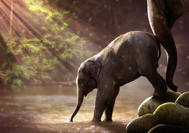elefante-impara