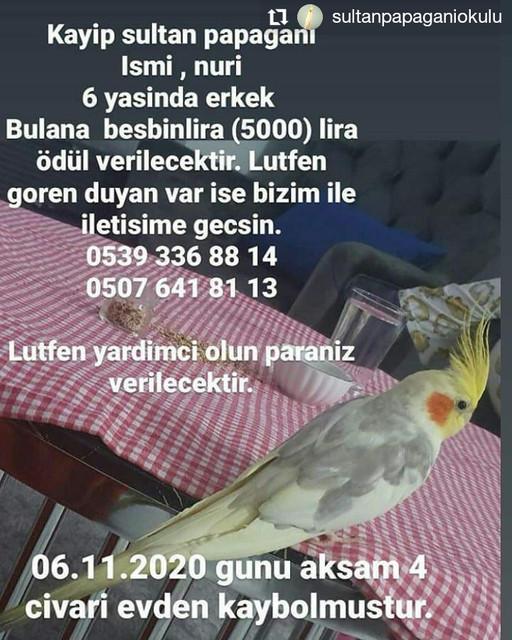 sultanpapaganiokulu-20201108-021022