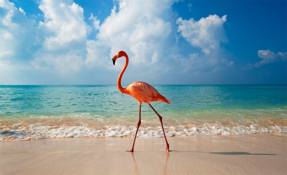 elegance-of-flamingo