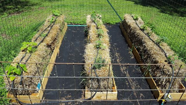 Straw-garden