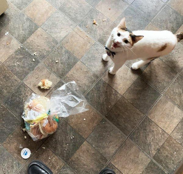 Кот порвал пакет с хлебом