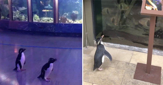 Topics tagged under 企鵝 on 紀由屋分享坊 51824093-1584419401-868-Ry-VY3-E-n