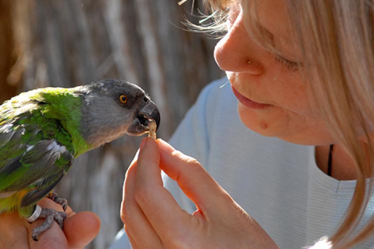 Forbidden foods for parrots