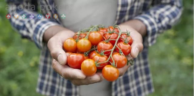 Kasus Pneumonia Pelatih Juventus Makan Tomat Bersihkan Paru-Paru
