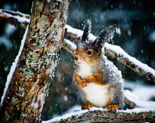 winter photographs 3
