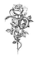 https://i.ibb.co/NZQ1Shd/serpent-rose.jpg