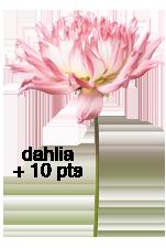Les Pissenlits - Page 20 Dahlia