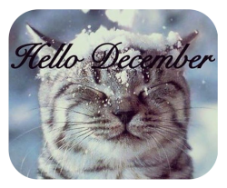 hello-december-cold-cat.png