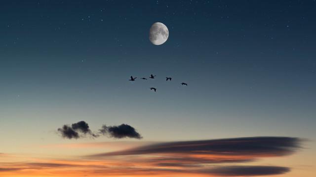 full-moon-birds-desert-138068-2048x1152