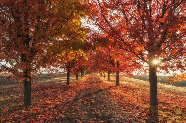 autumn-fall-season-trees-4k-zt