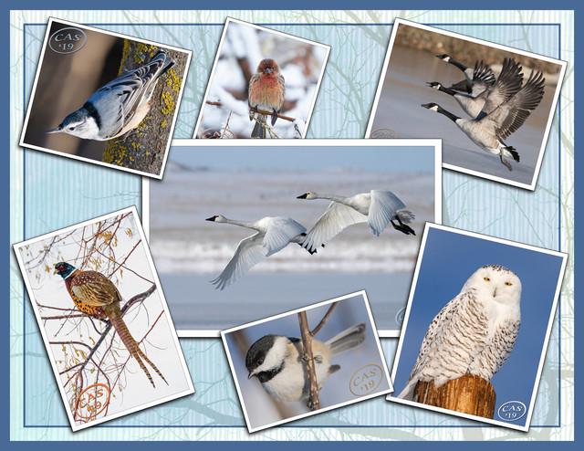 bird-collage-2000-CC