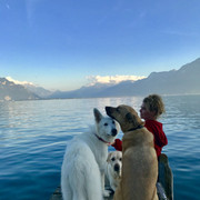 shania-switzerland-lakegeneva-dogs091519-1