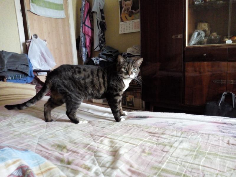 Cat-7.png