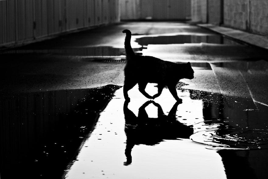 Таинственная кошачья жизнь в чёрно-белых фотографиях-18