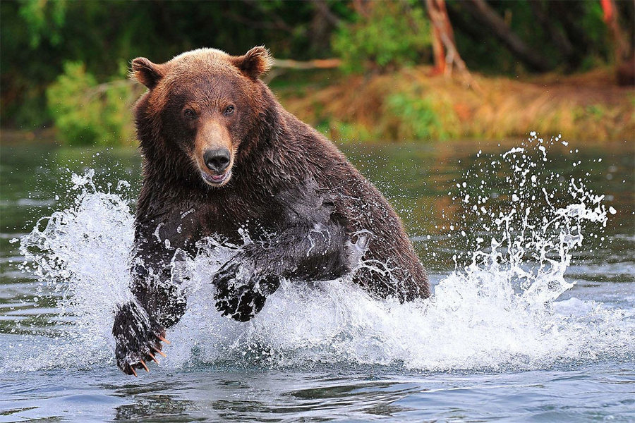 Невероятные фотографии медведей 2