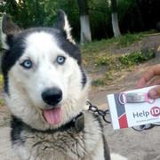Адресник для собак 19mm natural