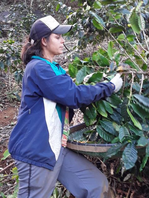 ATeG leva novas possibilidades a cafeicultores de Eugenópolis e Pedra Dourada, em Minas Gerais