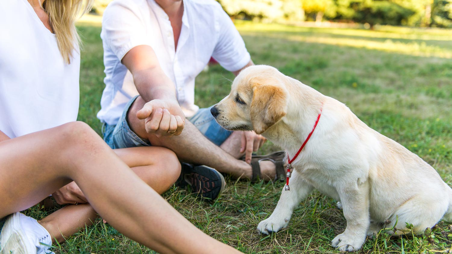 6 Training Tips for Socializing Your Puppy