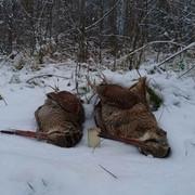 woodckock-on-the-snow