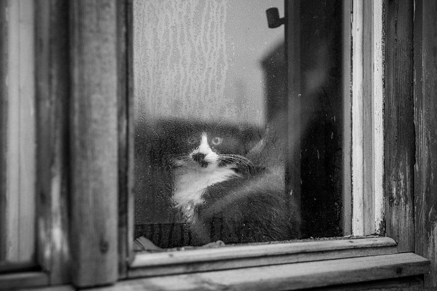 Таинственная кошачья жизнь в чёрно-белых фотографиях-10