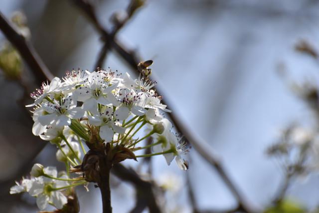 2019-03-09-Bees-Wasps-9