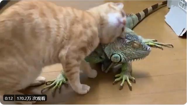 """""""嗯,這個蜥蜴不錯,舒服~"""" Image"""