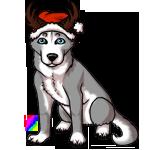 husky4