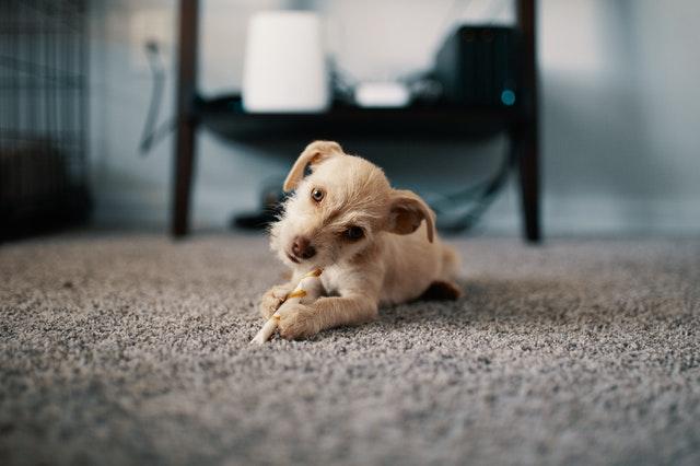 https://i.ibb.co/PcTGGRz/best-carpet-cleaning-service.jpg