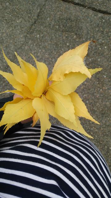 2-October-fall-walk