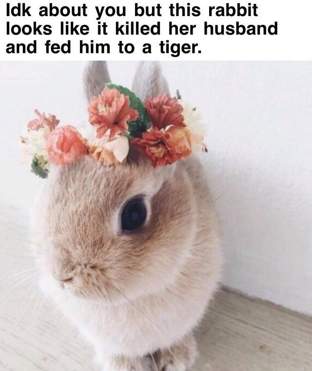 """bunnybaskins"""" border=""""0"""