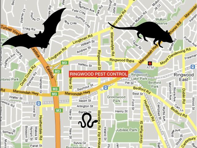 image of pest control in Ringwood Melbourne