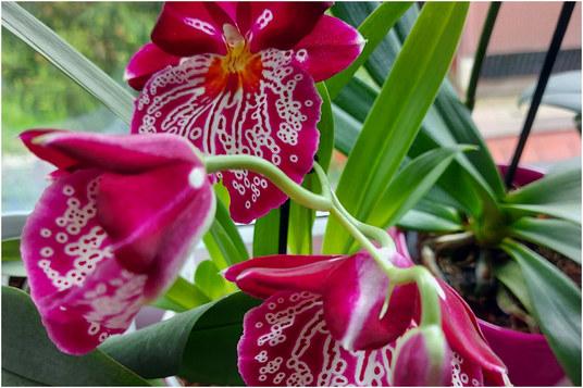 haljina-orhideja