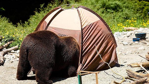 Медведи, такие медведи-5