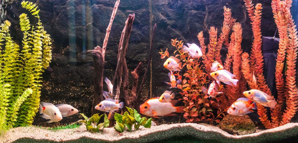 Fish tanks: Which is the best of 2021?