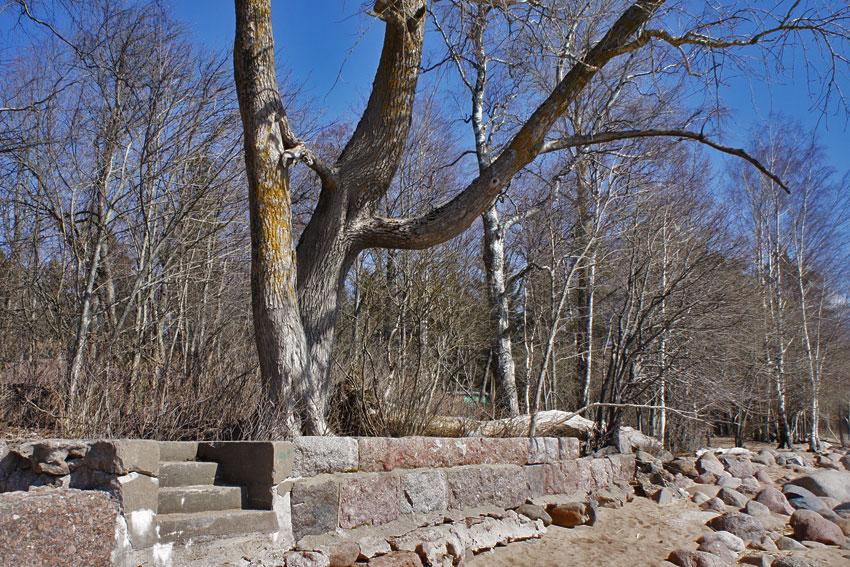 240420-sun-tree-02