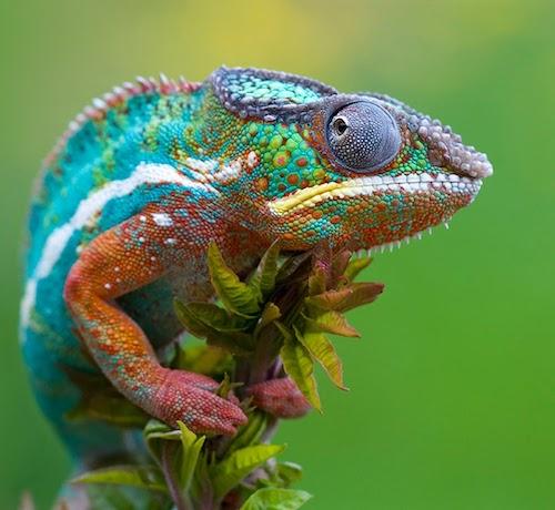 Mejores precios en Artículos para Reptiles
